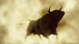 A bull runs in a cloud of dirt.